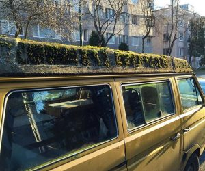 The Mossy Roof